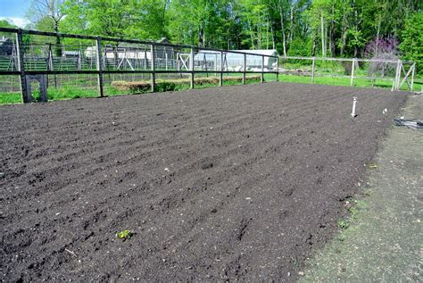 preparing the vegetable garden for planting the martha