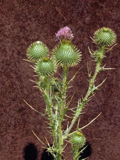 Types Of Weeds Hgtv