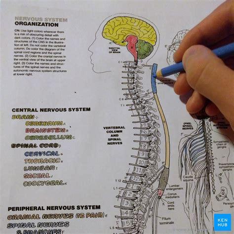 anatomy coloring books      kenhub