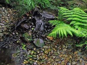Farn Im Garten : farn garten stockfoto bild von felsen na wald nachrichten 1072588 ~ Orissabook.com Haus und Dekorationen