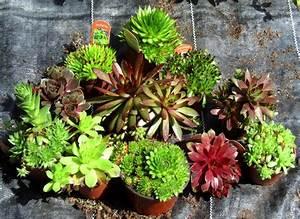 Winterharte Pflanzen Liste : winterharte balkonpflanzen liste ~ Michelbontemps.com Haus und Dekorationen