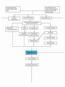 Pathophysiology Of Hypertension  Diagram