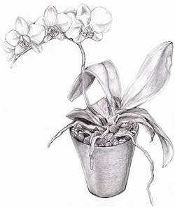 BW Orchid Drawing | art | Pinterest