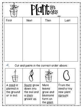 plant life cycle freebie science pinterest