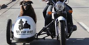 This Video of Dogs Riding in Motorcycle Side-cars Is the ...