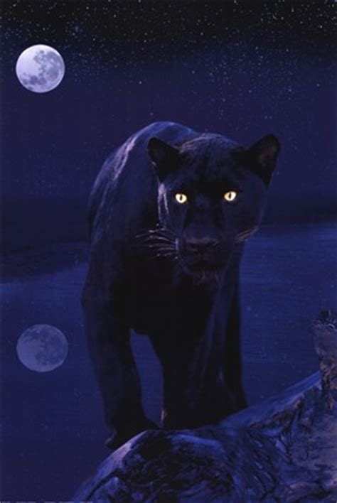black panther  moonlight wall poster  unknown
