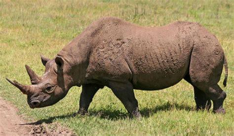 imagenes de animales en peligro de extincion