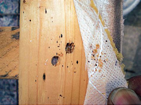 professional bed bug exterminators proper