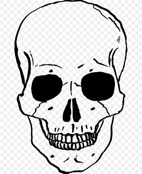 skull   clip art   transparent background