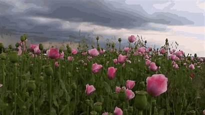 Roses Lugo Constelaciones Familiares Carmen Gaden July