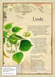 Linde Baum Steckbrief : die besten 17 ideen zu alte buchseiten auf pinterest buchseiten basteln mit buchseiten und ~ Orissabook.com Haus und Dekorationen
