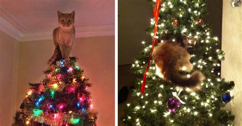 cats helping decorate christmas trees bored panda