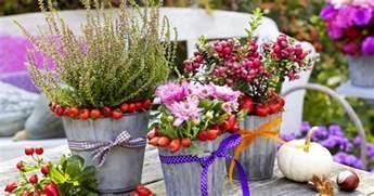 herbst balkon pflanzen herbst pflanzen und deko für balkon und terrasse mein schöner garten