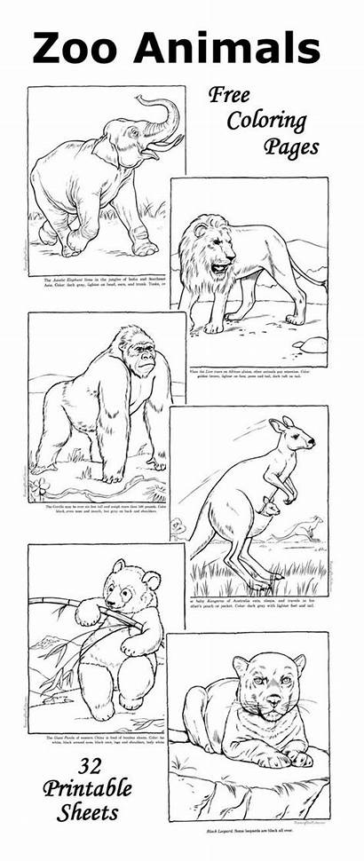 Animal Zoo Coloring Animals Pages Facts Printable