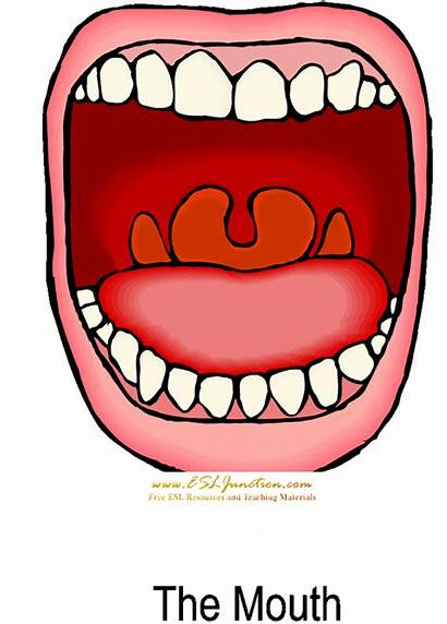 Mouth Clipart Clip Angry Human Anatomy Cliparts
