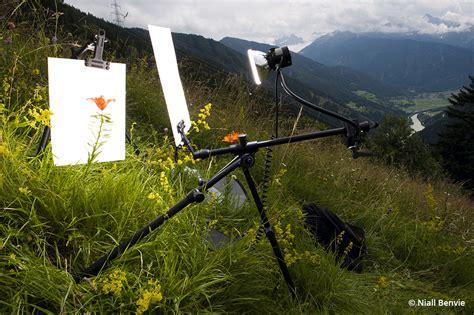 Macro Field Studio Outdoor Photographer Daily News Gazette