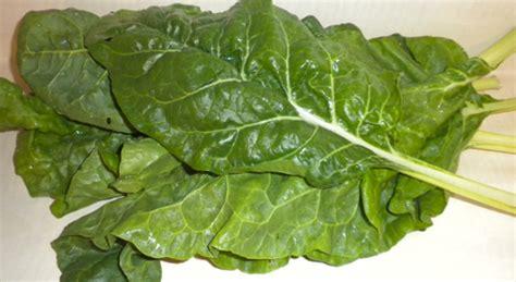 cuisiner choux vert 6 légumes verts à feuilles qui vont vous faire du bien