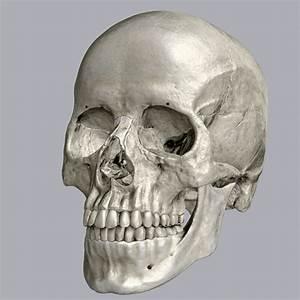Human Skull 3 Free Stock Photo