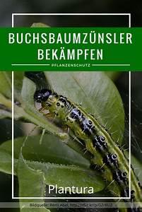 Spritzmittel Gegen Buchsbaumzünsler : buchsbaumz nsler erkennen vorbeugen bek mpfen gaart ~ Watch28wear.com Haus und Dekorationen