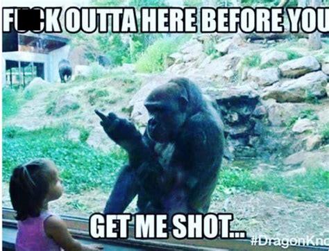 Funny Harambe Memes - must see harambe the gorilla memes page 4 bossip