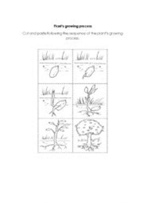 english worksheets plants growing process