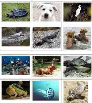 classification  animals animal groups structures