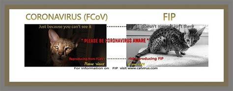 Cat Coronavirus Symptoms