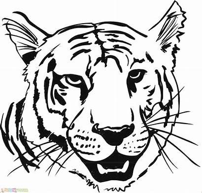 Harimau Gambar Mewarnai Untuk Paud Tk Marimewarnai