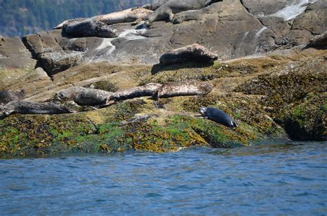 Horseshoe Bay Boat Rental by Traveling With With Around Vancouver Seal