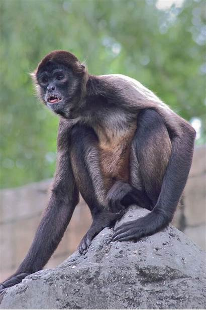 Zoo Monkey Sitting Audubon Orleans 2005 Louisiana