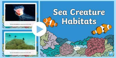 sea habitats video powerpoint   sea
