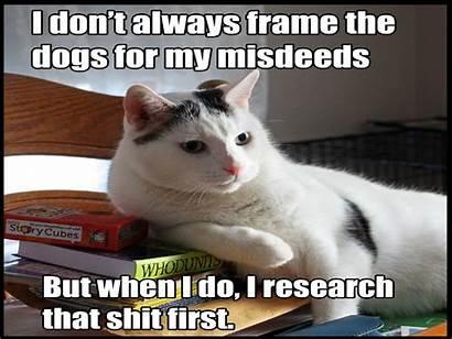 Funny Meme Cat Grumpy Humor Backgrounds Sadic