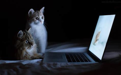 wallpaper lucu kucing  laptop gambar kartun lucu