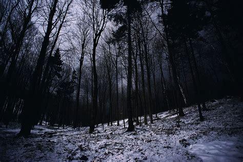 foret sombre effrayant regarder milieux hd libres bel