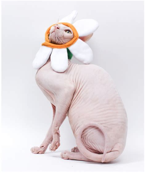 Trends  10 Amazing Halloween Costumes For Pets