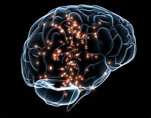 File Neuronal Activity Darpa Jpg