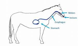Functional Horsemanship