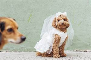 dog wedding petsmart nyc