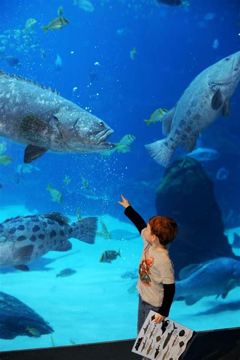 aquarium georgia grouper atlanta goliath pound fish aquariums ages come face fin experience visit underwater