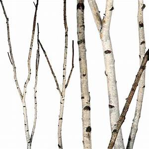 Birch Forks, 5' up to 8'