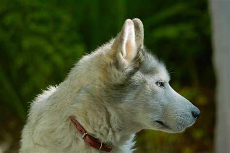 Dog  Ee  Breeds Ee   That Shouldnt Live With Cats Dog Reference