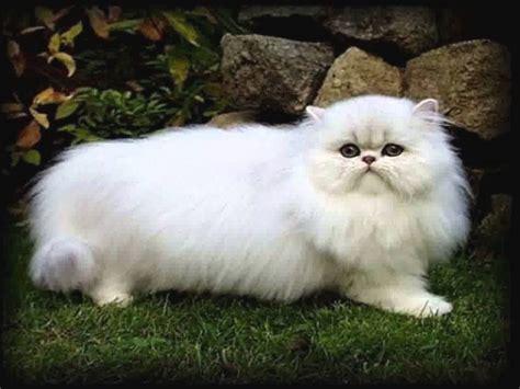 gambar anime imut gambar gambar anime lucu cantik kucing imut banget di