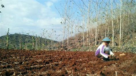 ayo menanam manfaat tanaman lingkungan rumah