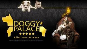 Hotel Pour Chien : un h tel 4 toiles pour chiens et chats ouvre ses portes ~ Nature-et-papiers.com Idées de Décoration