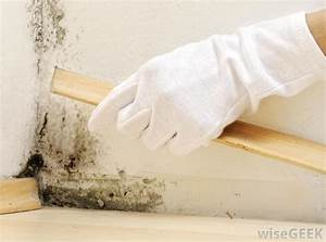 Diy get rid of the mold and moisture form you homes for How to get rid of mold on walls in bathroom
