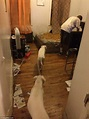 The Bronx apartment where 'killer' pit bulls and owner ...