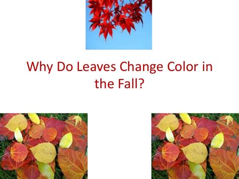 why do leaves change color in fall why do leaves change color in the fall