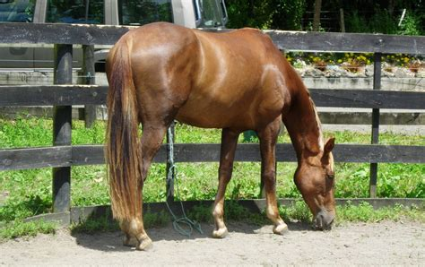horse horses pony young growing sport dressage scratch