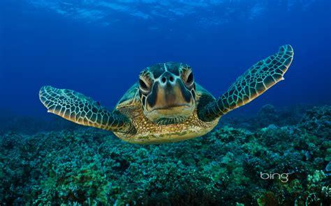 Sea Animal Wallpaper - sea creatures wallpaper wallpapersafari