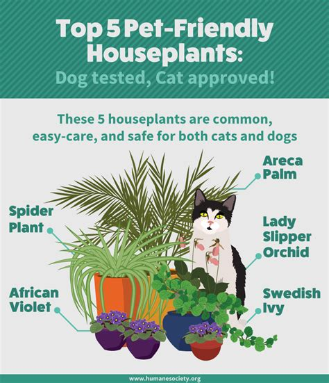 plants that are safe for cats 9967